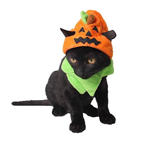 - Kätzchen Kostüme Für Kätzchen
