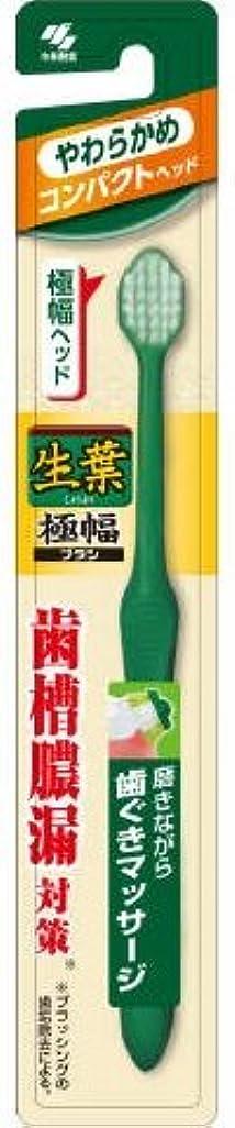 接辞起点エンコミウム生葉極幅ブラシ コンパクト やわらかめ × 10個セット