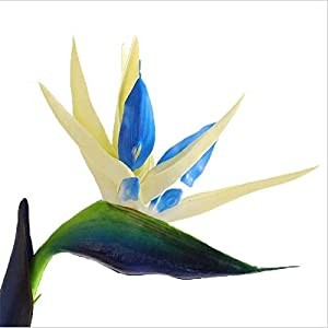 Artificial and Dried Flower 12CM Head/Length80CM Real Touch Fake Plastic Tropical Bird of Paradise Flower,Artificial Silk Long Flowers Home Decoration – ( Color: 03 )