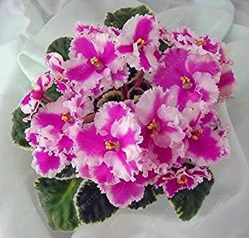 Vista 100 unids/Bolsa Semillas de Violeta Africana, Bonsai Semillas de Flores para la Planta de Jardãn en casa Hierba perenne de Alta incrustación Semillas de Flores del Jardãn 6