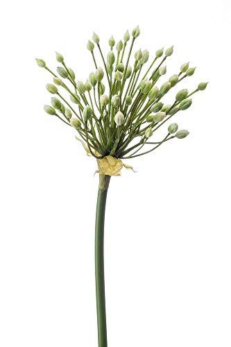 artplants.de Set 6 x Künstliche Blume Zierlauch KATYNA, Creme, 70cm - Kunstblume Allium
