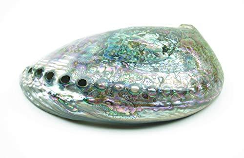 Steinfixx Abalone/Perlmutt - Concha de mar (Muy Decorativa, 150 x 100 x 40 mm)