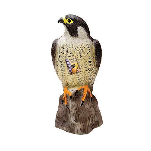 Defenders Falcon, Decoy Bird Scarer, Life-like Colouring