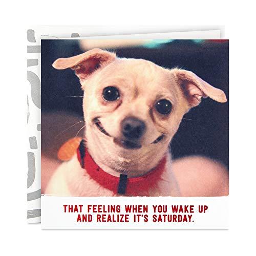 Hallmark Good Mail Funny Birthday Card (Smiling Dog, Feeling Like It's Saturday)