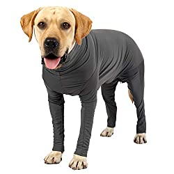 Yellow Labrador wearing a grey Heywean Surgical Suit for dogs.