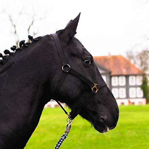 Halfter für Pferd Warmblut, Vollblut, Kaltblut – Stallhalfter, Weidehalfter, 2 Fach verstellbar an Kinnriemen und Genickstück, sicher & reißfest (Schwarz, Pony)