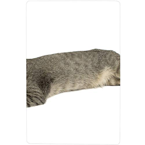 Cute Furry Grey Kitten Sleeps On A Pillow Cool Tub Mat with Strong Suction Cups 28x16 Inch(73cmx42cm) Best Bath Rugs Shower Bathroom Mat Bathtub Mat for Baby