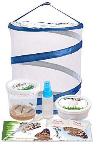 Nature Gift Store Live Butterfly Kit: Shipped with 5 Painted Lady...