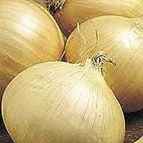 PLAT FIRM Germinación de las semillas: 100 - Semillas: Walla Walla dulce Cebollas-5-6 pulgadas de diámetro !! -Extra cebollas blancas grandes !! ¡DULCE!