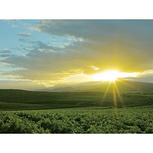 ベルタス・フォーリーバリスタピノ・タージュ[2018赤ワインフルボディ南アフリカ750ml]