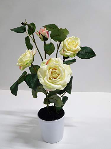 Ziegler Rosenstamm Rose Rosenstock...