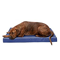 what is the best orthopedic dog bed
