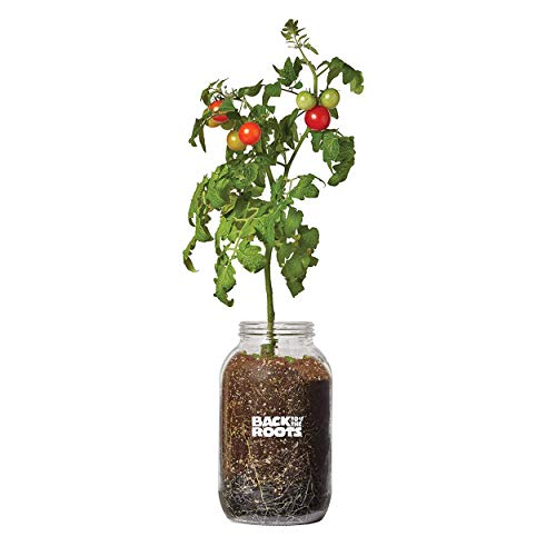 Back to the Roots 25100 Organic Planter Grow Cherry Tomatoes Year Round, Windowsill Indoor Garden Kit, 1, glass