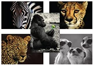 Wild at Heart Animal Cartes Postales, without envelope, Packs of 50