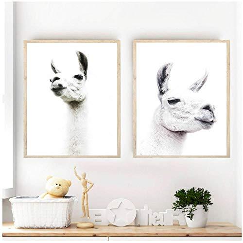 Fotobehang Schilderij Dier Alpaca Kunstafdrukken en Posters Wit Alpaca Fotografie Foto's Zuid-Amerikaans dier Decoratie / 50x70cmx2pcs geen lijst