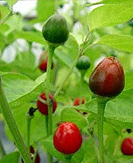 South African Pequin Hot Pepper Seeds (20 Seed Pack)