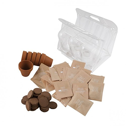 Graines et serres en plastique pour jardinage à l'école