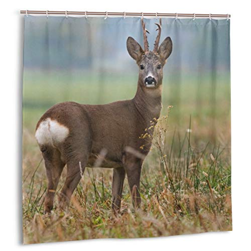 Wdoci Duschvorhang,Rehe Männchen Capreolus Westeuropäische Wildtiere Fauna Meadow Field Grass,Wasserdicht Bad Vorhang mit Haken 150cmx180cm