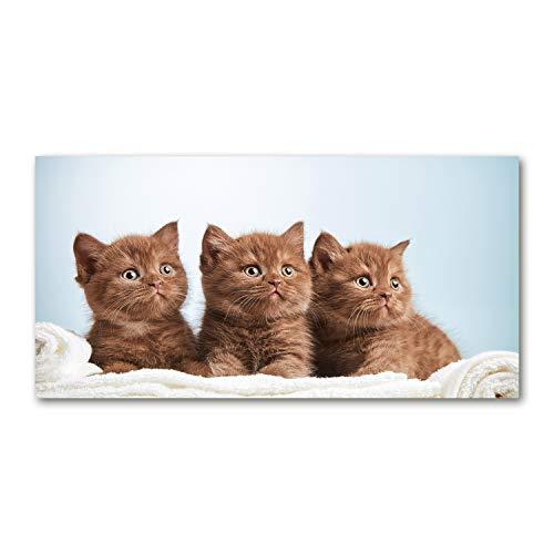 Tulup Leinwandbild - Wandkunst - Drucke auf Leinwand - Leinwanddruck -100x50 cm - Tiere - Braun - Kätzchen Handtuch