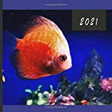 2021: Monthly Photo Calendar | January 2021 - December 2021 | Monthly Calendar with U.S./UK/ Canadian/Christian/Jewish/Muslim Holidays | Tropical Fish