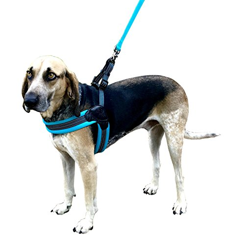 Sporn Easy Fit Dog Harness, Mesh, Blue, Small (SPUS20065)