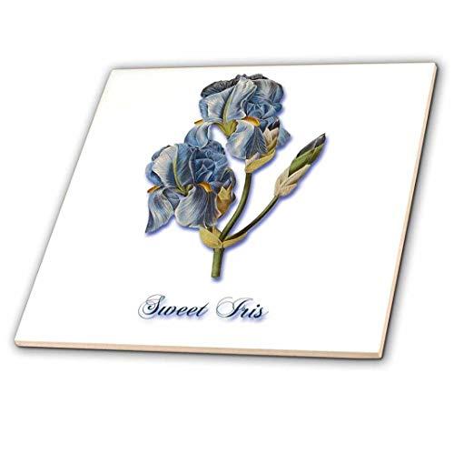 3dRose CT 171218_ 1Sweet Iris, Botanical Print of a Light Blau Bearded iris-Ceramic Fliesen, 4-Zoll