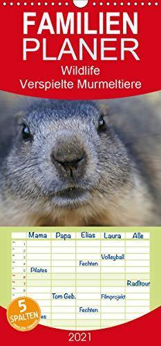 Wildlife - Verspielte Murmeltiere - Familienplaner hoch (Wandkalender 2021 , 21 cm x 45 cm, hoch): Auf Spielboden / Saas Fee / Schweiz ist es für ... (Monatskalender, 14 Seiten ) (CALVENDO Tiere)