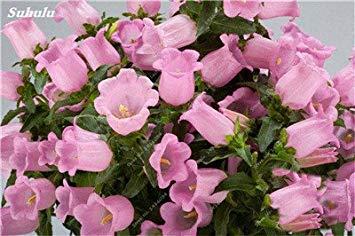 VISTARIC Vert: 200PCS Pure-couleur Pétunia Graines de fleurs Graines vivaces fleurs pour jardin Bonsai Pot Plantation Pétunia pour la maison décoration verte