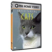 Understanding Cats [DVD] [Import]
