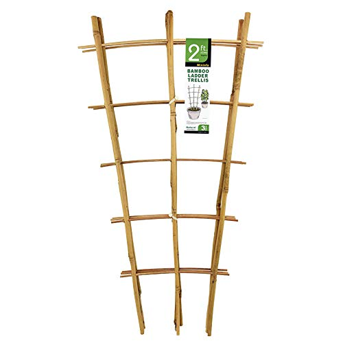 Mininfa Natural Bamboo Trellis 24 Inches Tall, Garden Ladder Trellis, Plant Trellis for Climbing Plants, Vegetables, Pots - 3 Pack