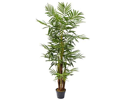 kunstpflanzen-discount.com Areca Palme mehrstämmig Kunstpalme mit 25 Palmwedel 160cm - Künstliche Arecapalme