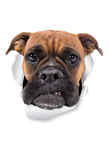 Winston & Bear Grumpy Boxer Dog Wall Decals - 2 Pack - Boxer Dog Toilet Sticker – 3D Dog Car Window and Bumper Sticker - Retail Packaged Boxer Dog Lover Gifts