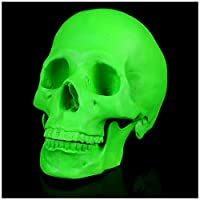 XYXZ 解剖学モデル人間の頭蓋骨モデル-レジンスカルクラフトスケルトンスタチュー医療レジンスカルヘッドレジンハロウィーンの装飾のための人間のスケルトンモデル医学教育訓練援助