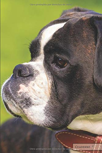 Perros: Boxer: Cuaderno único, planificador, diario, para un regalo (páginas en blanco) ideal para amantes de los  perros, niños, niños, niñas, para ... recetas, bocetos, listas, organización y