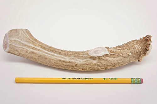 ONE (1) Piece Jumbo/Extra Large Deer Antler Chew Bone for Dogs, 9""