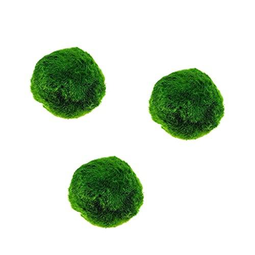 Qingsi 3 bolas de musgo marimo secas vivas, bolas de musgo para acuario, musgo, peces y acuario, bola decorativa de musgo verde, para tanque de agua dulce, plantas acuáticas de reptiles