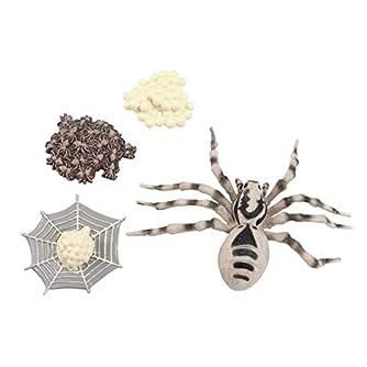 TOYANDONA 昆虫のライフサイクルフィギュアリアルな昆虫フィギュアおもちゃは子供タランチュラのための動物科学の茎のおもちゃの変態を示しています