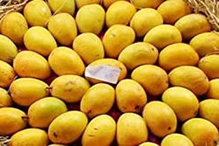 Organic Alphonso Mango 2 Seeds by AchmadAnam