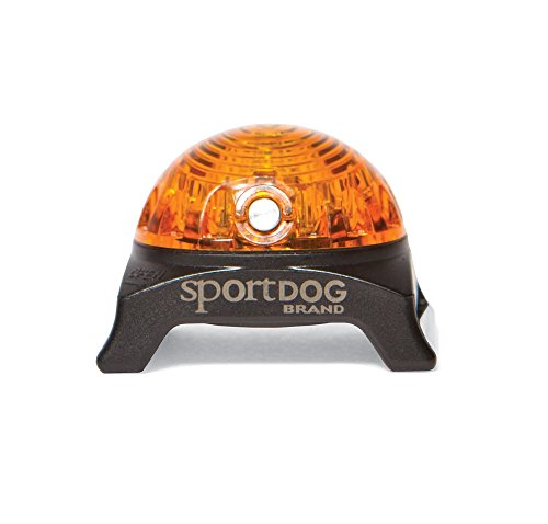 Top Dog Collar Brands