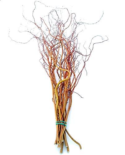Frische Korkenzieherweide-Zweige orange 80-110 cm lang; ca. 8 Zweige | echte Weidezweige für Bodenvasen | Naturholzäste zur Dekoration