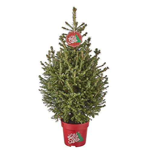 Little Santa® Weihnachtsbäumchen