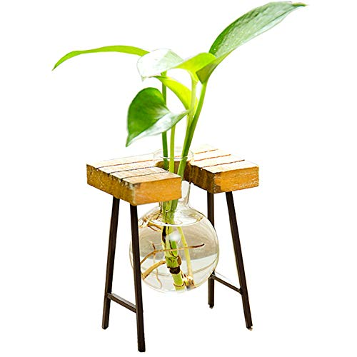 Kingbuy Hydroponic Desktop Glass Flower Pot Bulb Vase with Retro Solid Wood Stand Small Bench Frame for Hydroponic Plant Family Garden Wedding Decoration(1 Bulb Vase)