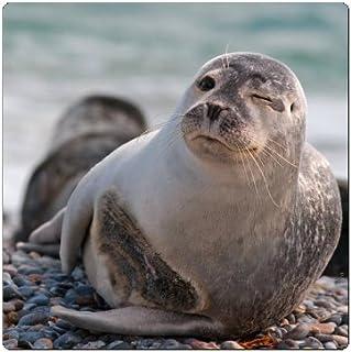 Frigorifero magnetica//Magnet zwinker nder foca
