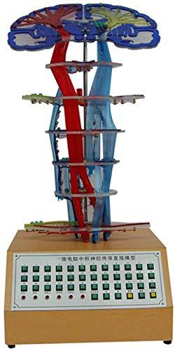 Modello di studio Modello di conduzione nervosa centrale Modello di anatomia umana Modello Microcomputer Modello Elettrico Mode
