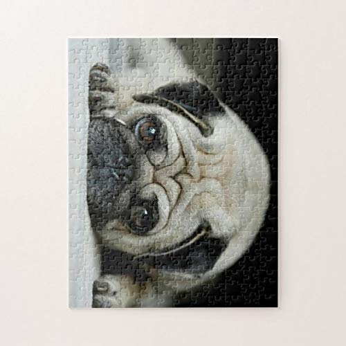 Sad Pug Dog Lying Down Dog Look Cute Puppies 500 Pieces Jigsaw Puzzle, Puzzles for Adults and Kids Jigsaw Puzzle Intellectual Decompressing Fun Family Game Toys
