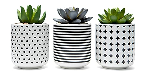 dipiti Artificial Succulent Plants in Pots-Set of 3|Black and White Ceramic...
