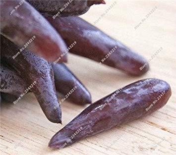 VISTARIC 10: Bonsai Finger de pépins de raisin délicieux pot organique plante pour les plantes ornementales Maison et jardin Can comestible sain Fruit semences 60 Pcs 10