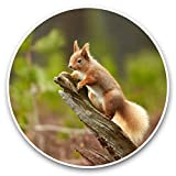 Impresionantes pegatinas de vinilo (juego de 2) 20 cm – Wild Red Squirrel Nature Animal calcomanías divertidas para portátiles, tabletas, equipaje, reserva de chatarras, neveras, regalo fresco #46442