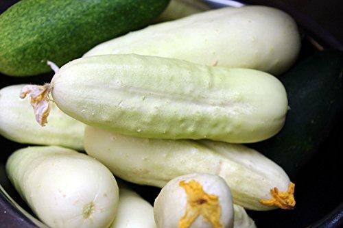 Concombre blanc\