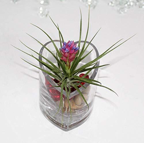 Athena's Garden Fresh Flowers & Live Indoor Plants - Best Reviews Tips